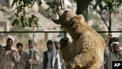 د کابل ژوبڼ یوه اېږه