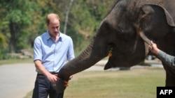 Hoàng tử Anh cho một con voi ăn trong chuyến thăm Trung Quốc năm 2015.