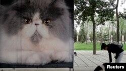 资料照:一名女子在北京一个公园里树立的猫粮广告旁与她的宠物狗玩耍。