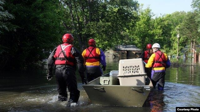 Animals are rescued after flooding in Memphis, Tennessee in 2011. (American Humane Association)