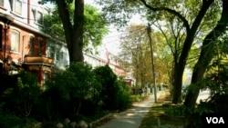 Pohon-pohon rindang menghiasi jalanan di sebuah kawasan permukiman di tengah kota Toronto(© 2007 Torie Gervais/LEAF)
