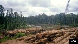 Penggundulan hutan tidak hanya menciptakan bencana lingkungan seperti banjir atau tanah longsor. Para ahli penyakit menular dari Universitas Wisconsin, menemukan kaitan meningkatnya wabah malaria dengan penggundulan hutan.
