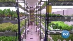 New Delhi Hydroponic Farm Flourishes During Pandemic
