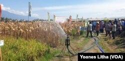 Demonstrasi irigasi menggunakan water gun sprinkler yang dapat menghemat penggunaan air, 15 Agustus 2019. (Foto: VOA/Yoanes Litha).