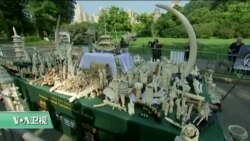 VOA连线:纽约最高检联合环保组织销毁象牙制品