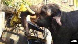 В Индии слоны ворвались в город