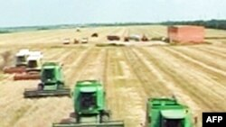 ФАО: наступного року значно зросте ціна на продовольство