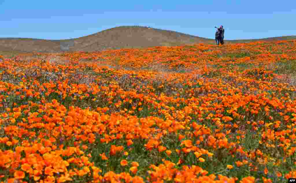 People visit poppy fields at the Antelope Valley Poppy Reserve in Lancaster, California, April 21, 2019.