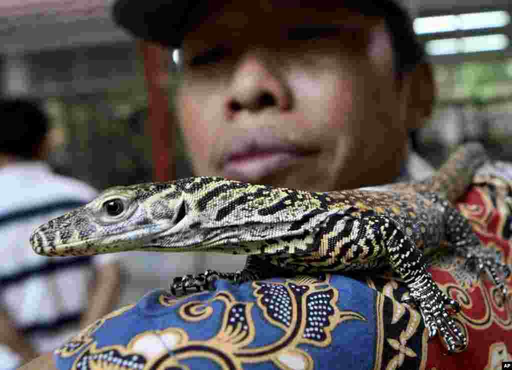 Một người trông coi sở thú đưa cho các nhiếp ảnh gia xem một con rồng Komodo con, tại sở thú Surabaya, Đông Java, Indonesia.