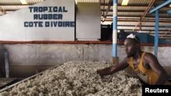 资料照:阿比让以北一座村中内的橡胶厂工人。(2016年1月25日)