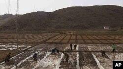 ປະຊາຊົນພາກັນເຮັດໄຮ່ເຮັດນາຢູ່ນອກເມືອງ Kaesong, ເກົາຫຼີເໜືອ ຊຶ່ງປະສົບກັບຝົນຕົກໜັກ ແລະອາກາດ ໜາວຜິດປົກກະຕິ ໃນຮອບ 60 ປີ ຊຶ່ງຍັງຜົນເຮັດໃຫ້ປະເທດ ຂາດແຄນເຂົ້າປາອາຫານ ມາໂດຍຕະຫຼອດ. ວັນທີ 7 ມີນາ 2012.
