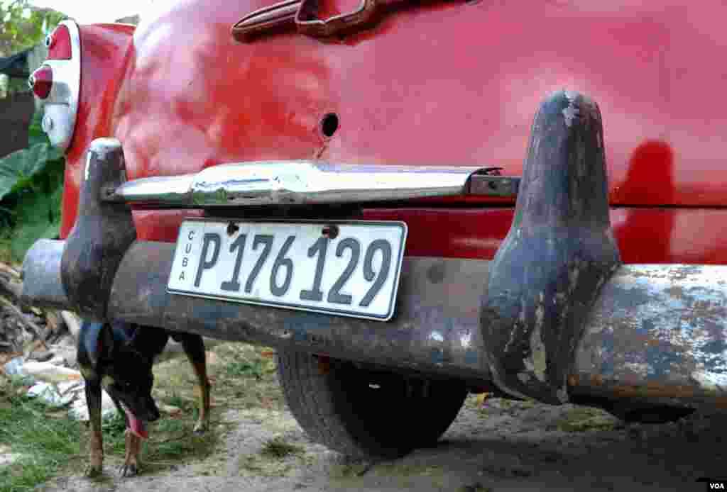Car/dog scene from El Globo, Cuba, on the outskirts of Havana. (R. Taylor / VOA )