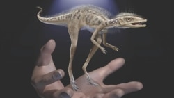 Quiz - Study Suggests Dinosaurs May have Started as Very Small Creatures