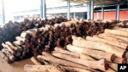 Madeira moçambicana para o mercado da República Popular da China