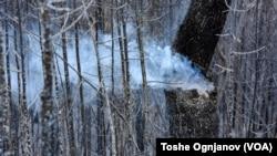 Пеплосана шума - последици од пожарите во делчевскиот регион