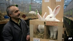FILE - Breeder Kurt Haid checks on some white German Giant rabbits at a show in Bremen, Germany, Dec. 11, 2007.