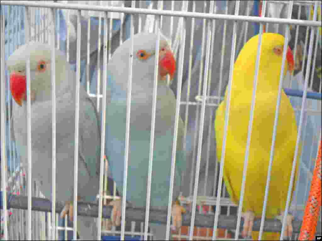 پرندہ مارکیٹ