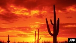 Obama Arizona'daki Göçmen Yasasından Kaygı Duyuyor