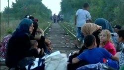 2015-08-26 美國之音視頻新聞:大量移民進入匈牙利,聯合國呼籲更大幫助