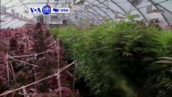 VOA60 America - Ohio votes 'no' to marijuana legalization