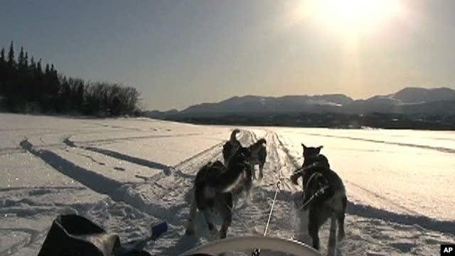 A dog sled in Yukon Territory, Canada