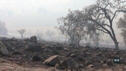 Лісові пожежі у Каліфорнії. Стихія частково знищила виноробну столицю США. Відео
