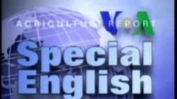 Special English 1430