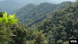 Los arboles del Amazonas están muriendo más rápido y absorbiendo menos carbono.