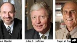 올해 노벨 의학상 수상자로 선정된 미국의 브루스 보이틀러 박사(좌), 룩셈부르크의 율레스 호프만 박사(중), 캐나다의 랄프 슈타인만 박사(우)