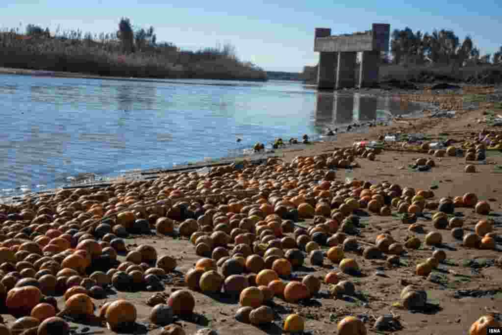 سرمای شدید امسال موجب خسارت به مرکبات باغداران مازندران شده است. بخشی از پرتقال دور ریخته شده از طریق رودخانه تجن به دریا راه یافته و اینچنین در ساحل دیده می شود عکس: مصطفی شانچی