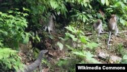 Taman Nasional Gunung Leuser, Sumatera, Indonesia (Foto: Wikipedia).