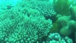 澳洲大堡礁近處擬填土擴建煤港環保人士猛批