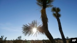 FILE - The sun sets behind joshua trees in Joshua Tree National Park in Twentynine Palms, California, Jan. 16, 2013.
