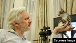 Julian Assange is seen with his new pet kitten. (Via @EmbassyCat)
