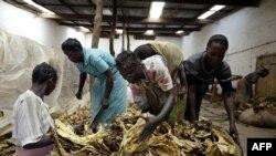 Des ouvriers agricoles au Zimbabwe, le 14 décembre 2012.