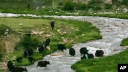 A shepherd leads his yak through a river running in the high Tibetan plateau south of Nianqing Tangula mountain in Dangxiong county, China Thursday July 6, 2006. Tibet's glaciers and their runoff constitute a valuable resource for China as it faces incre
