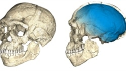 Quiz - Scientists: Early Humans Were Not as Simple as One Would Think