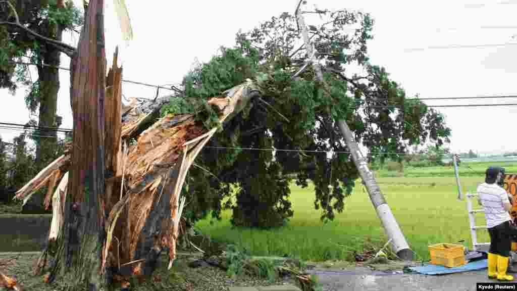 A huge tree and a power pole are damaged by strong wind caused by Typhoon Halong in Minobu town, Tochigi prefecture, Aug. 10, 2014.