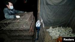 4月5日,一名武漢販賣家禽商販在當局頒下暫停活雞買賣命令後﹐將家禽收起。