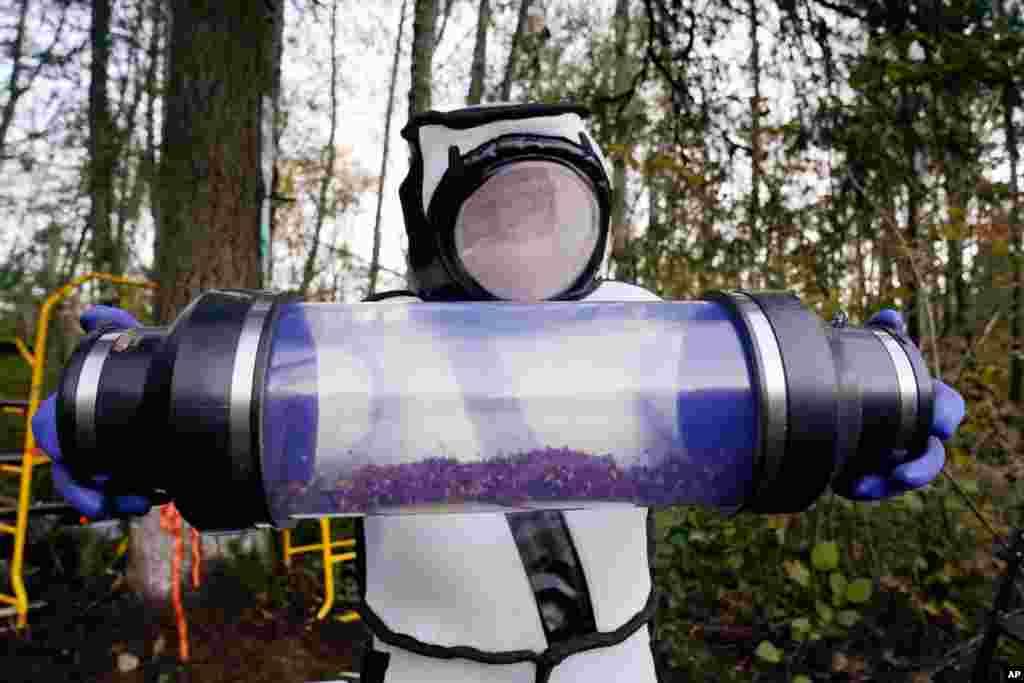 عملیات کشف و نابودی زنبورهای مشهور به «قاتل» در ایالت واشنگتن آمریکا. این زنبورهای بزرگ و قرمز رنگ زنبورهای عسل را از بین میبرند.