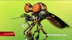 Giải mã bí ẩn mắt ruồi