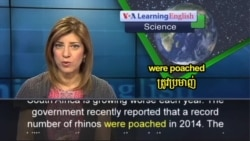 Killing of Rhinos in South Africa Increases in 2014