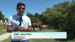Amerikana: Assateague - Vəhşi atlar qoruğu