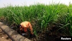 A worker irrigates a sugarcane plantation at Kenana Sugar Company's main plant, 270 km (170 miles) south of Khartoum, Sudan, May 14, 2013