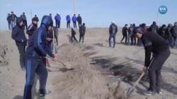 Kurumakta Olan Aral Gölü'nü Ağaçlandırma Çalışmaları