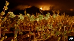 A wildfire from a distant mountain burns over a vineyard in Kenwood, California, Oct. 10, 2017.