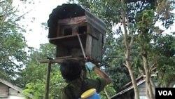 Virus H5N1 yang mengancam ternak di Poso bulan lalu kini menyebar luas di puluhan desa di Bali (foto:dok).