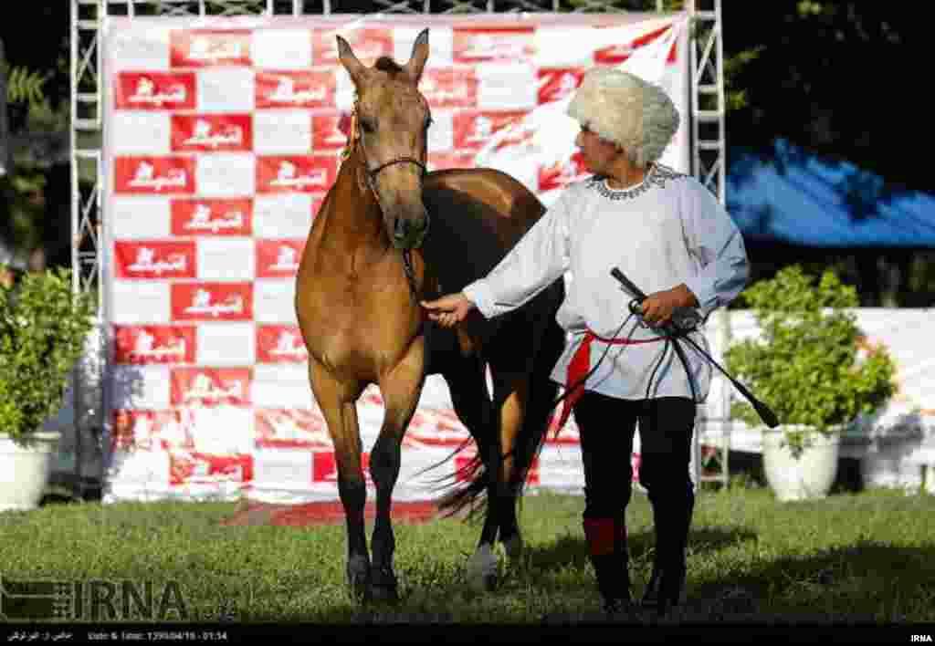 حراج اسبهای ترکمن تولید داخل کشور با شرکت ٣٠راس اسب در باشگاه سوارکاری نوروزآباد تهران برگزار شد. عکس: اکبر توکلی