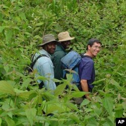 Agricultural researchers at a maize, plantain, and cassava nursery in southwestern Cameroon