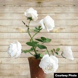 Квітка з порцеляни, подарована Меланією Трамп Акі Абе. Автор - Володимир Каневський